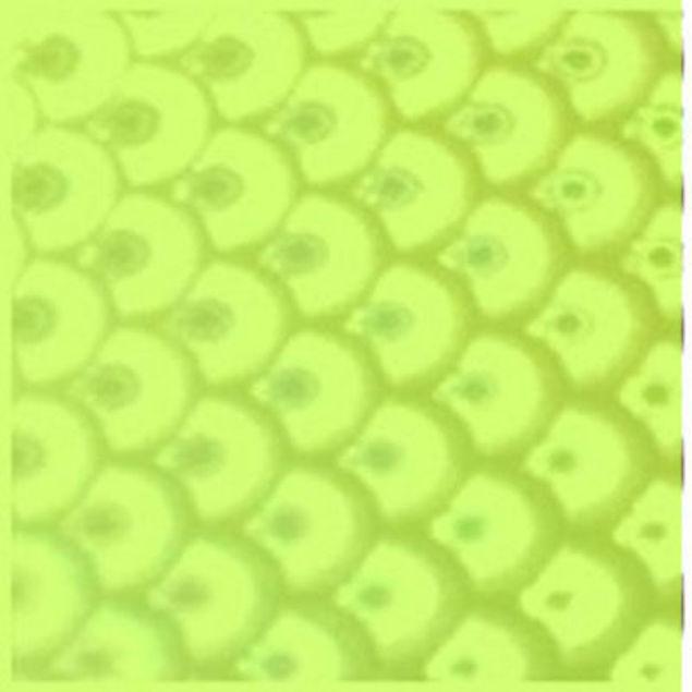 3306823.jpg