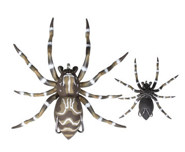 spider021.jpg