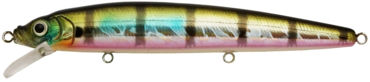 Picture for category Minnow
