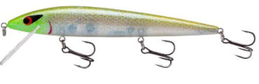 Picture for category Elite 8 Rougue Minnow